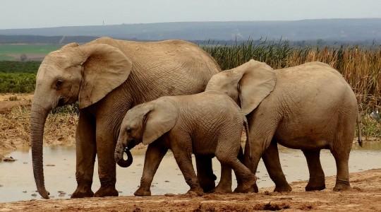 Voir des animaux en Afrique du sud : quelle réserve ou parc national choisir ?