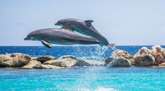 Où et quand voir et nager avec des dauphins en France