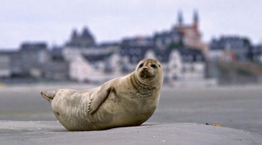 Où et quand voir des phoques en Baie de Somme