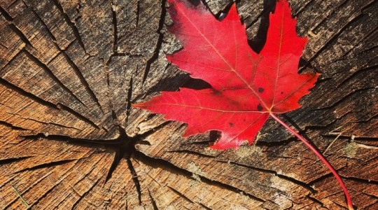 Où et Quand partir au Canada pour l'été indien ?