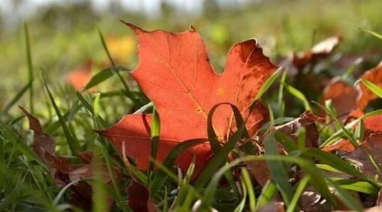 Découvrez le Canada en automne !