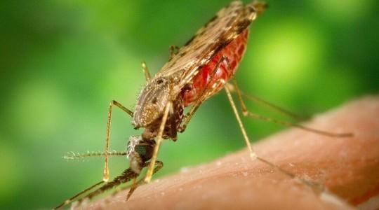 Paludisme en Thaïlande : les zones à risques et comment s'en prémunir