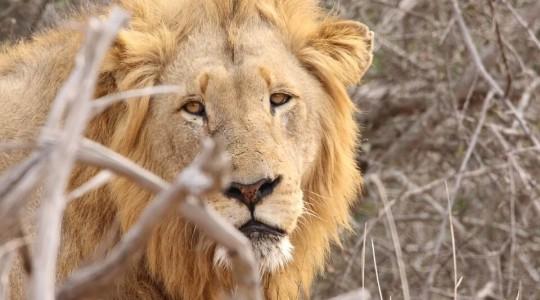 Faire un Safari en Afrique du Sud : tout ce vous devez savoir