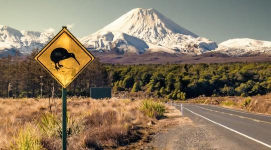 Quels animaux peut-on voir dans la nature en Nouvelle-Zélande ? Où et quand les observer ?