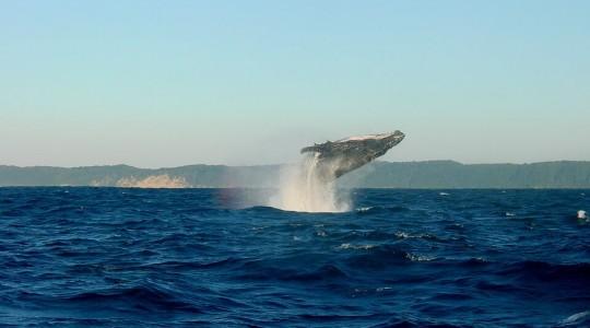 Où et Quand observer des baleines en Islande ?