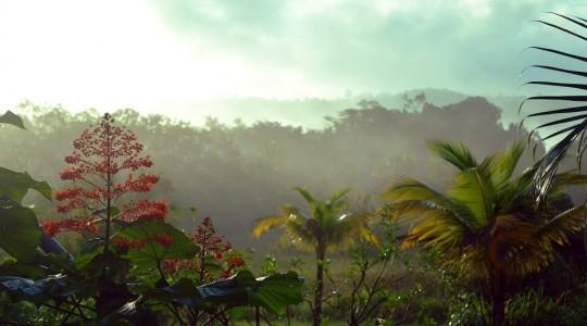 Saison des pluies en Guyane : c'est quand ? À quoi faut-il s'attendre ?