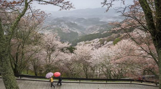 Japon : Voyager durant la saison des pluies (mousson), à quoi s'attendre ?