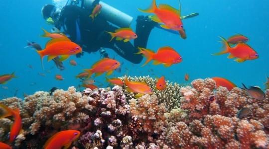 La Réserve Cousteau en Guadeloupe: le paradis de la plongée!