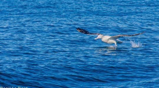 Où et quand observer des baleines en Nouvelle-Zélande ?
