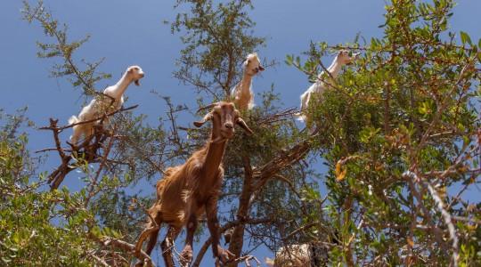 Que faire à Agadir ? Les incontournables et les inédits